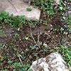 Csőtörés a kertben